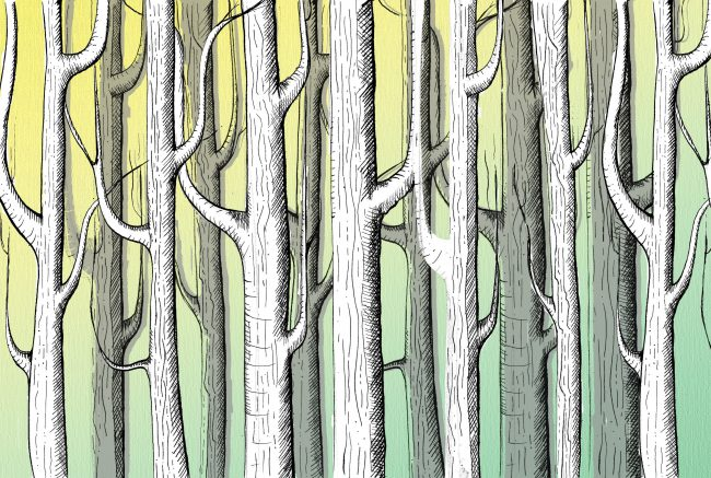 F is for forest illustration